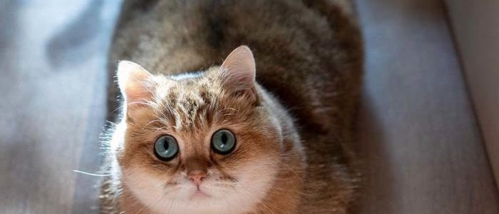 Hosico Stunning Cats With The Most Beautiful Eyes