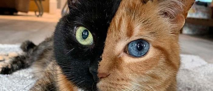 Venus Stunning Cats With The Most Beautiful Eyes