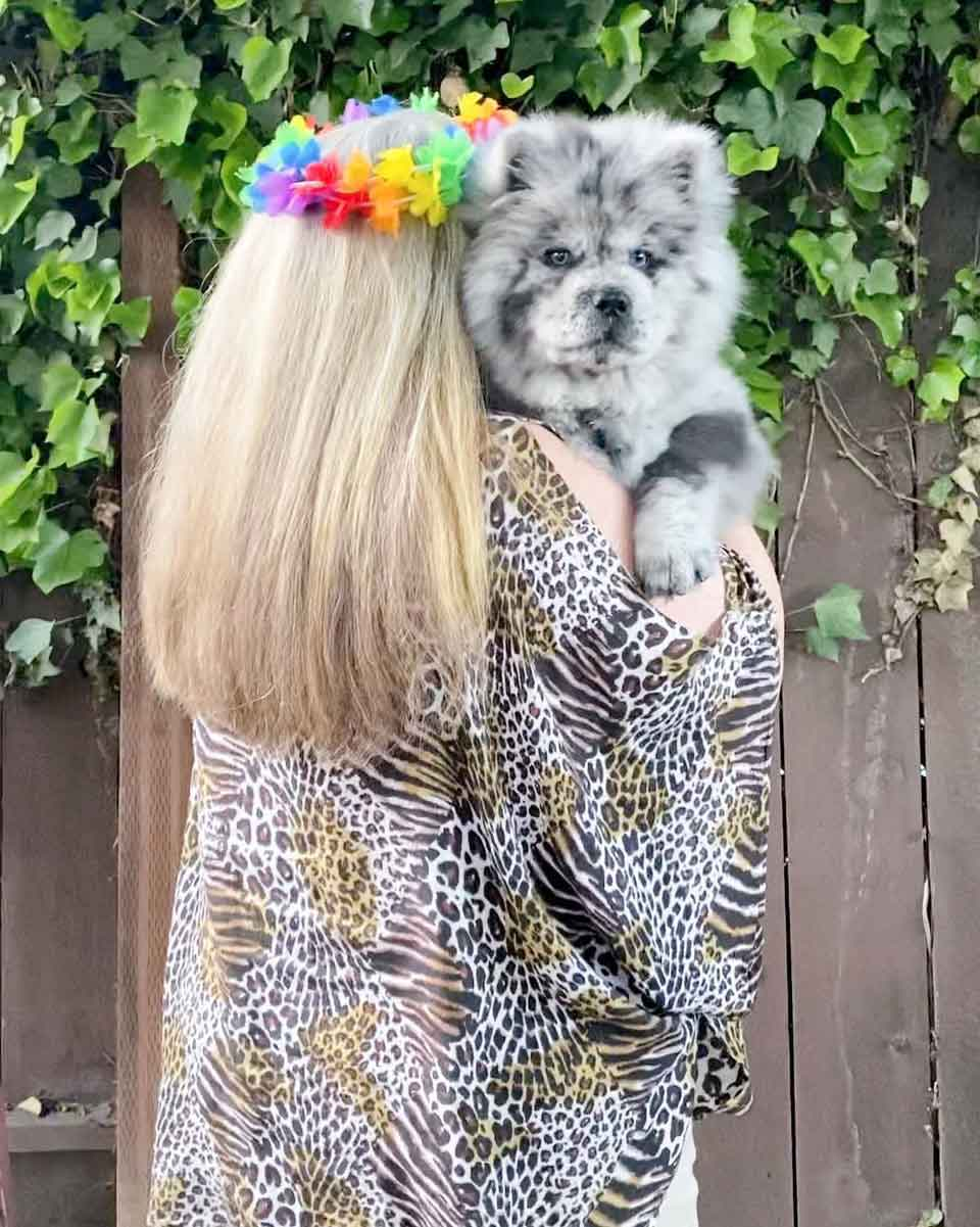 adorable puppy trained dog therapy The Oreo Cloud
