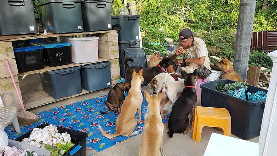 couple adopt 15 dogs thai island