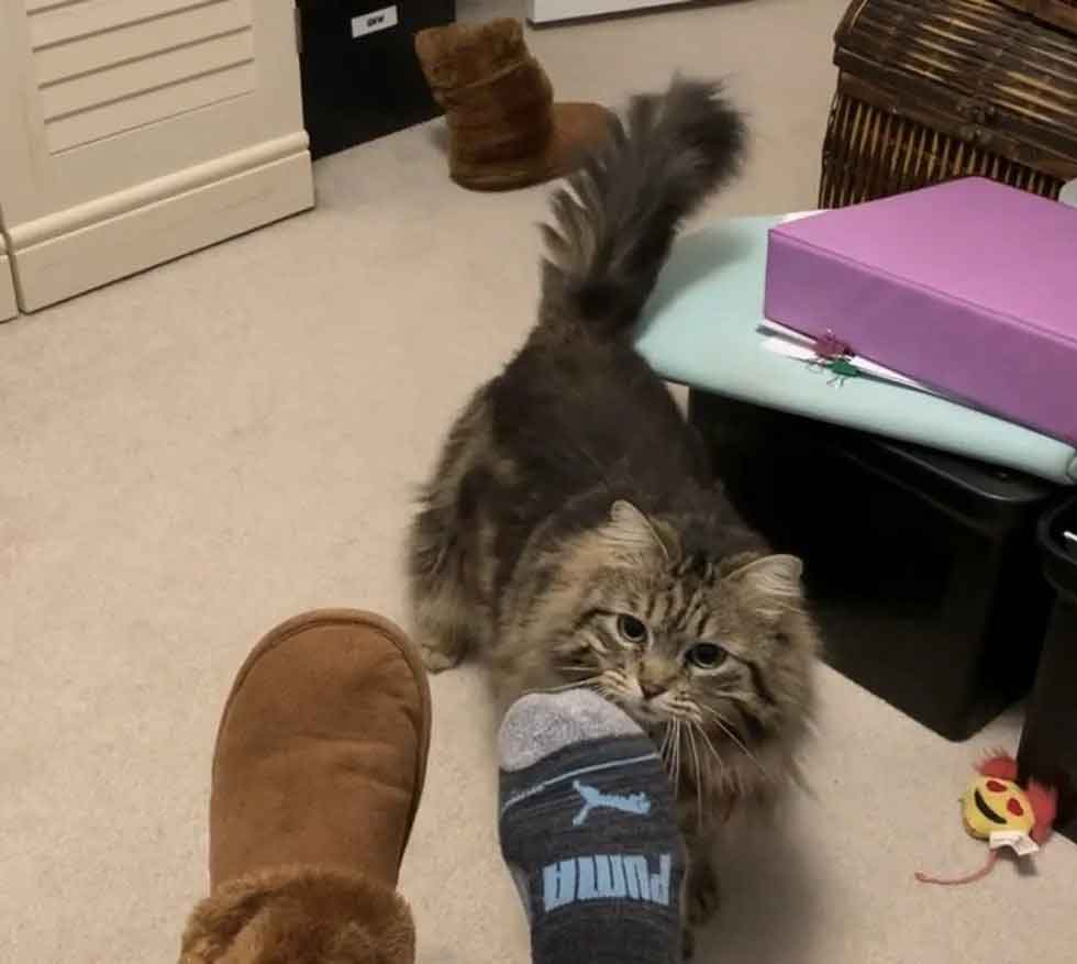 happy adopted Cat bring slippers morning