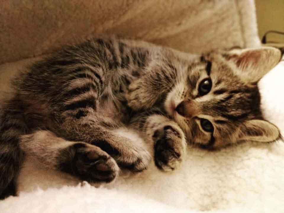 happy cat find help kitten