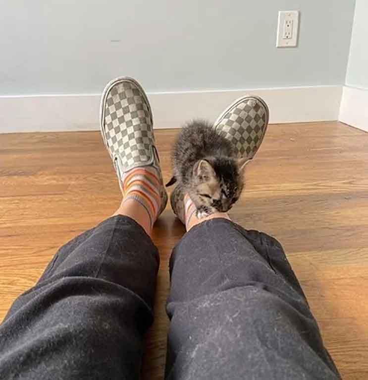 homeless kitten enters apartment turns home