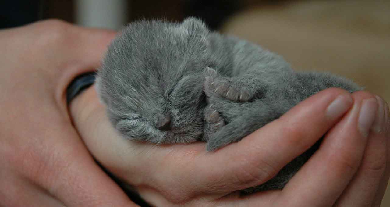newborn kitten