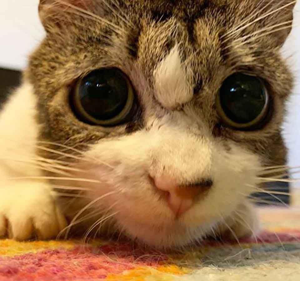 sad eyes cat thanks person