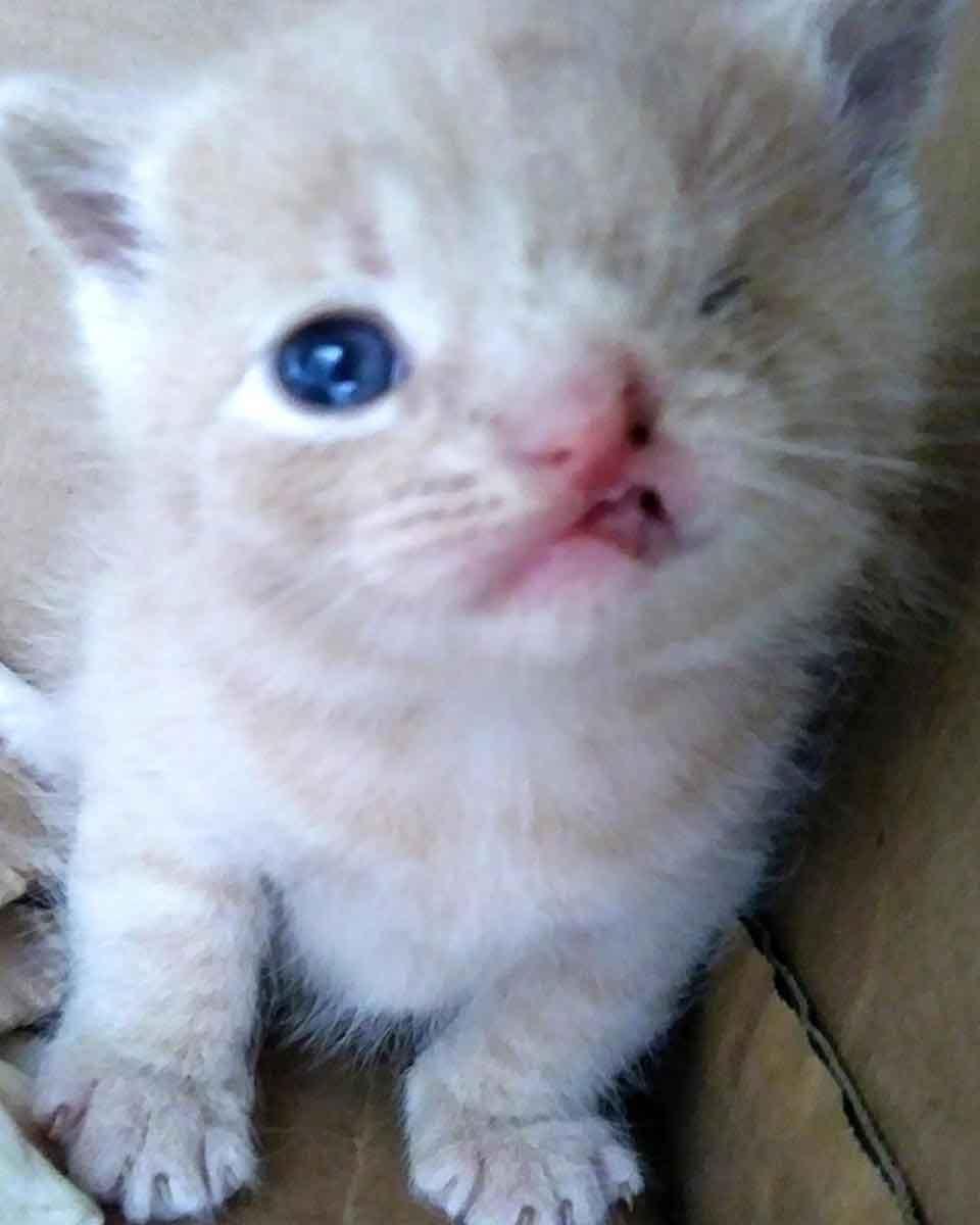stray cat kittens one eye Kurduroy cat