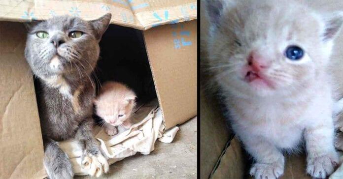 stray cat kittens one eye