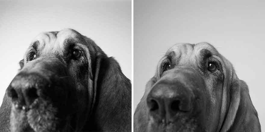 Amanda Jones How Dogs Age old young