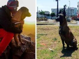 Chica Malinois Dog Toubkal