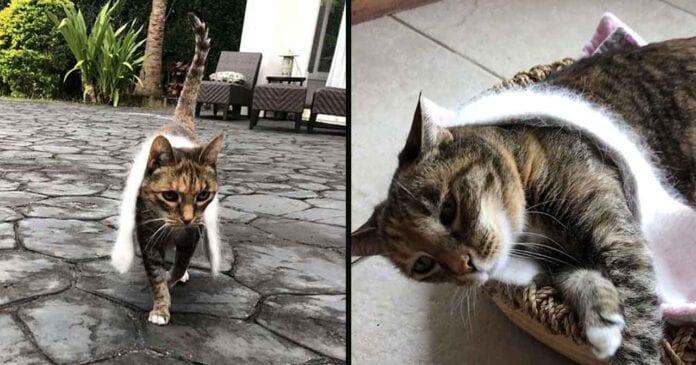 Cinnamon cat obsessed scarf