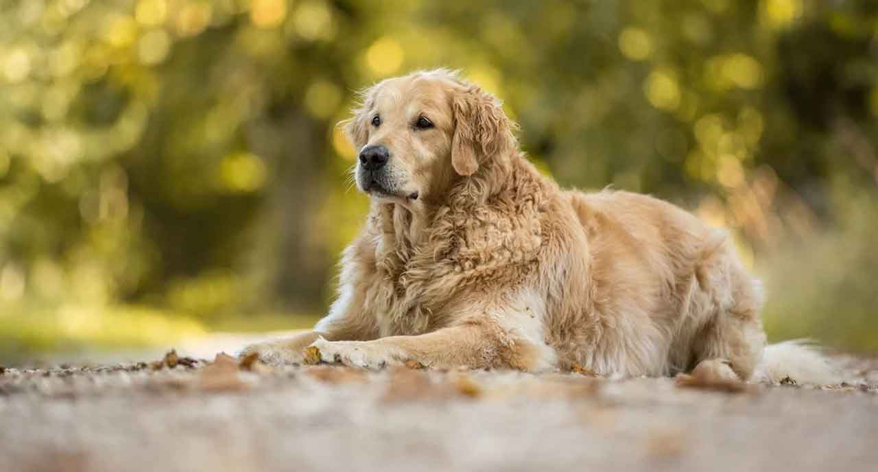 Dog Breeds for New Owners