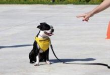 Dogs Learn