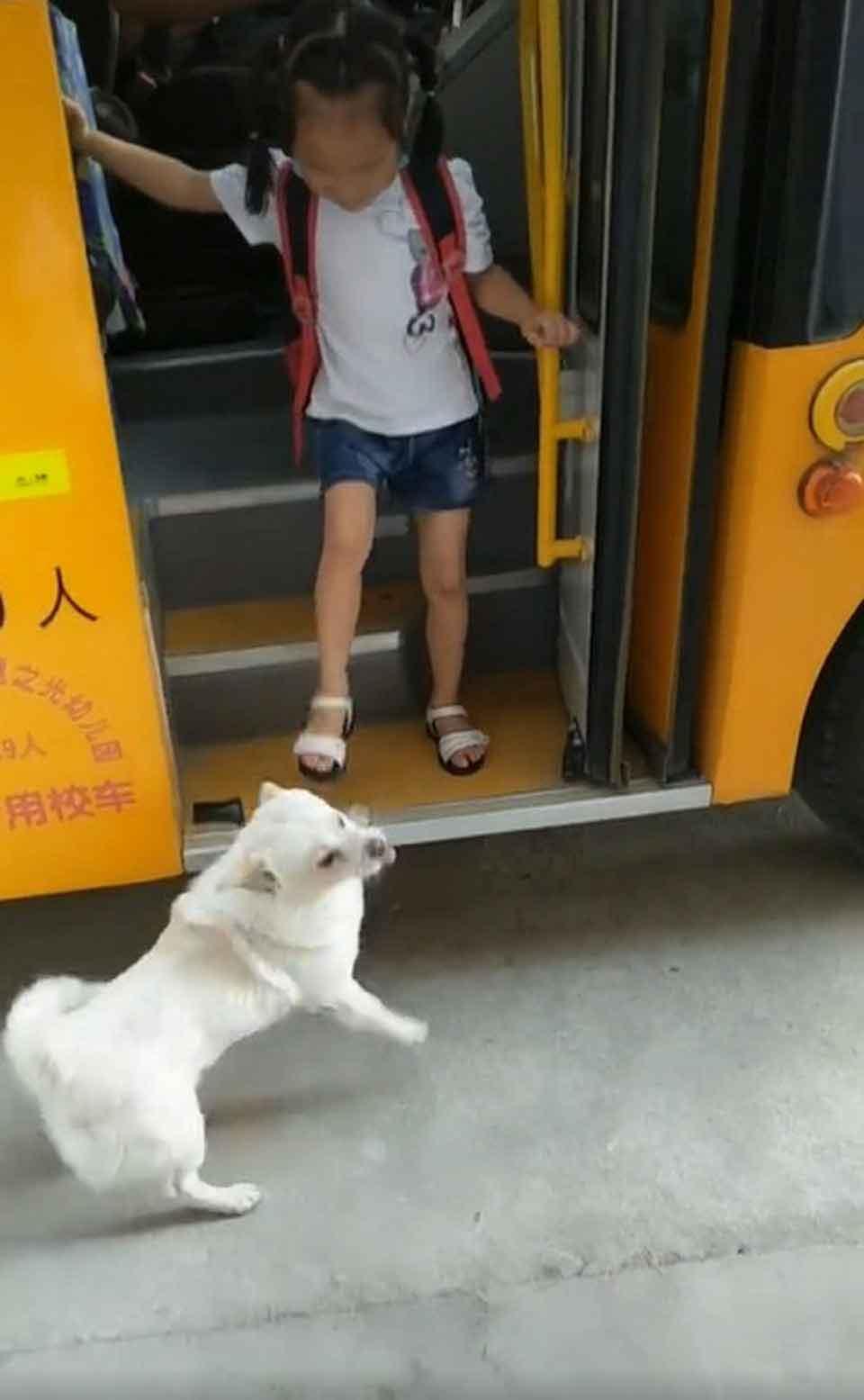 Faithful dog waiting young owner bus safe