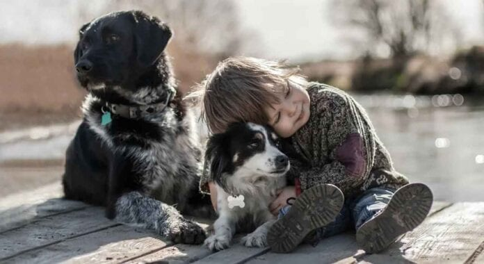 Humans Love Dogs