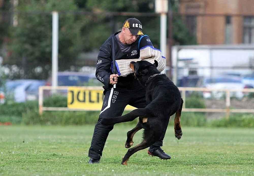 Train Dog training