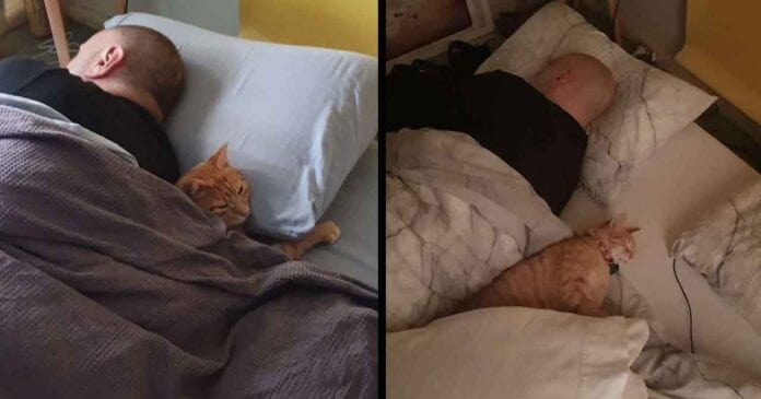 cat Tigger sneaks into neighbors house