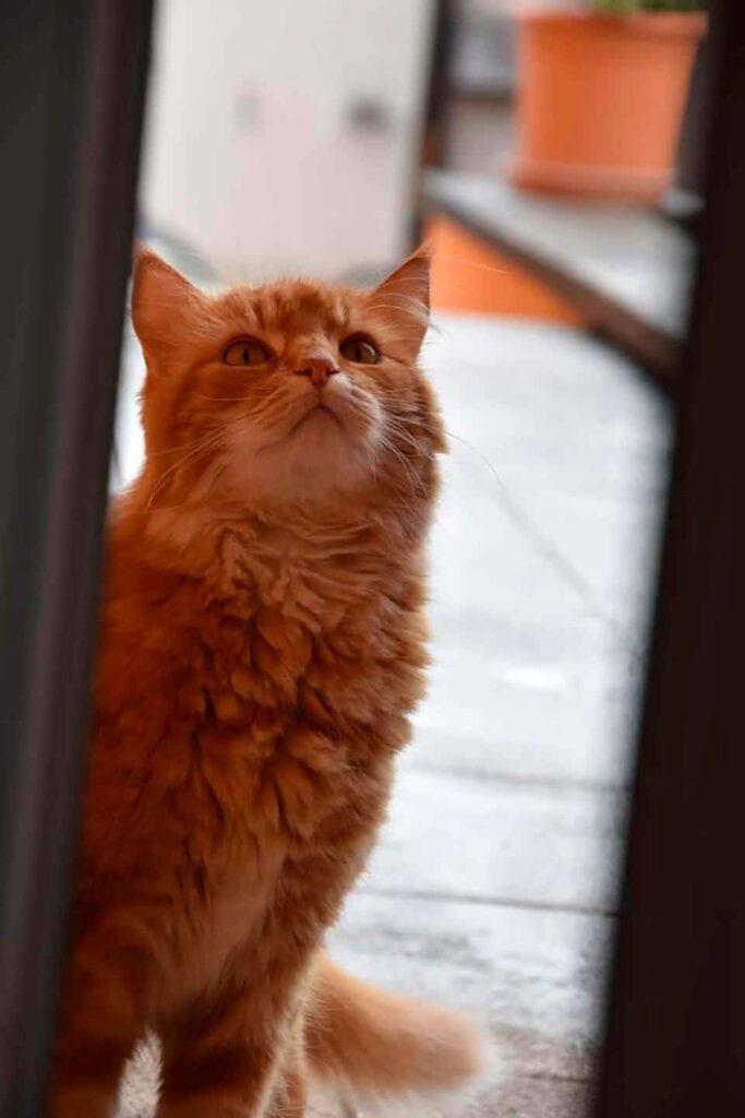 cat runs greets neighbors morning open blinds