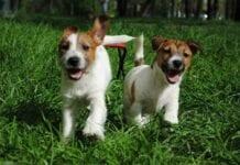 Helpful Tips Dog Training