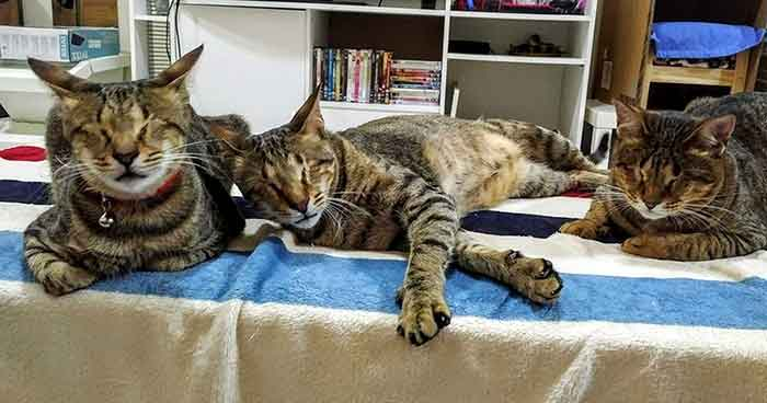 woman adopted three blind cats
