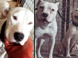 Blanca Blanco Rescued Dogs