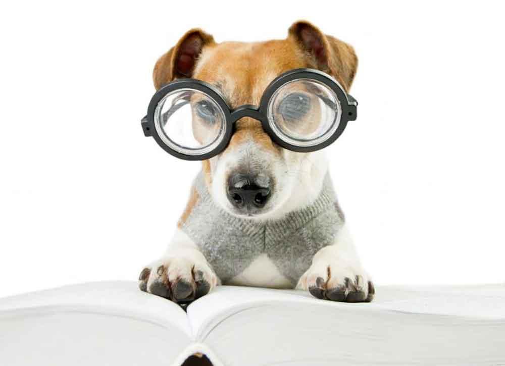 Cataracts dog