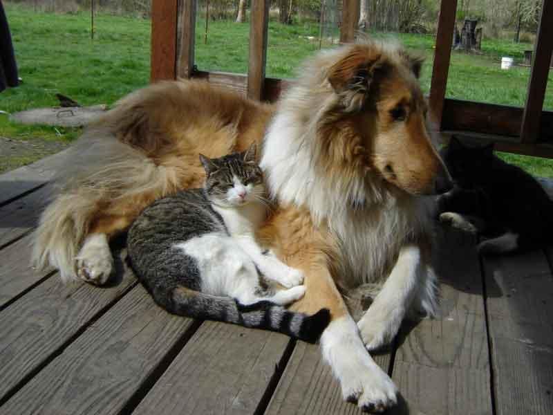 Dog Breeds Live Cats