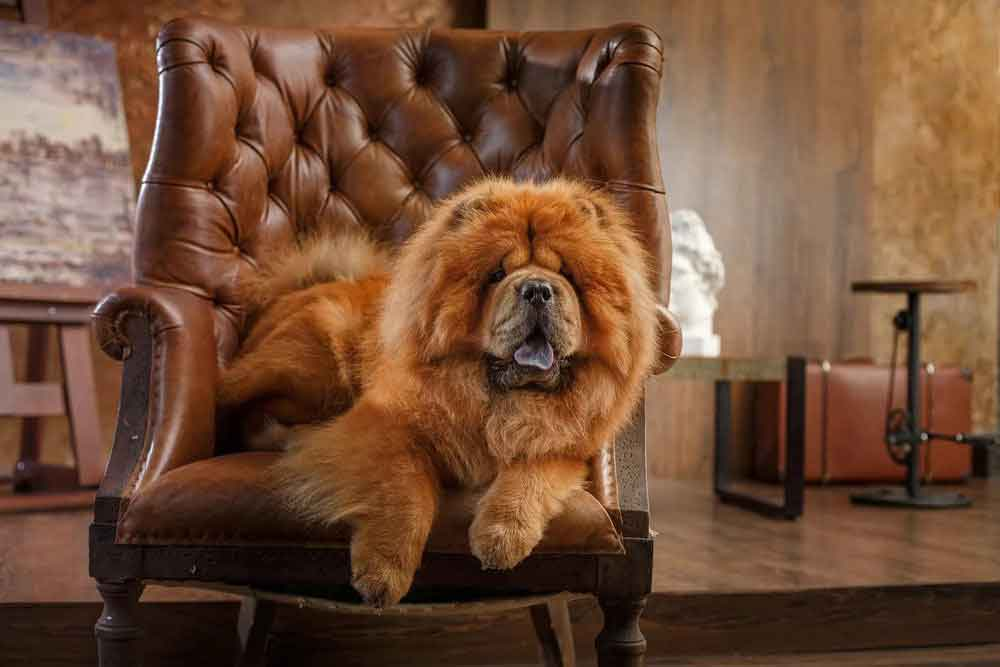 Dog Breeds Shed Heavily Golden retriever