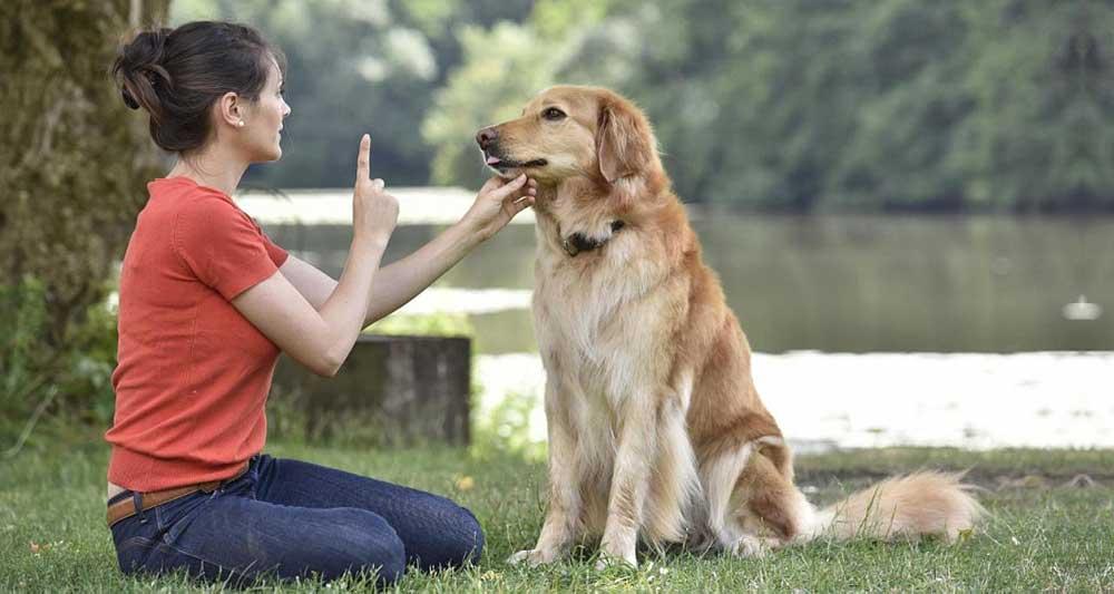 Dog Myths