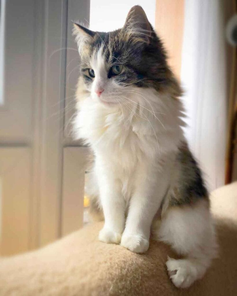 Lucy Lilly Cats Help Treat Depression Ilka