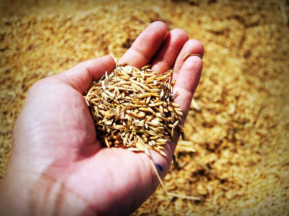cereals cats Pearl barley