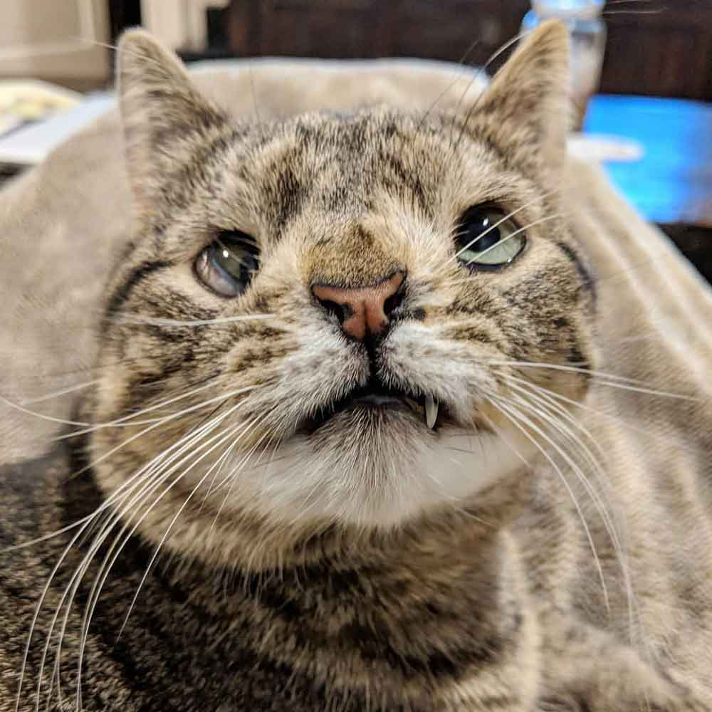 odd cat maya extra chromosome lauren
