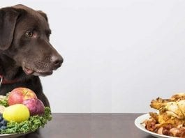 Can Dogs Eat Vegetables Fruits