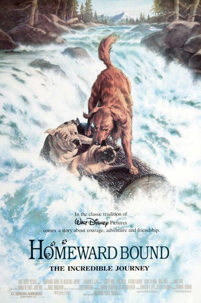 Cat Movies Homeward Bound An Incredible Journey