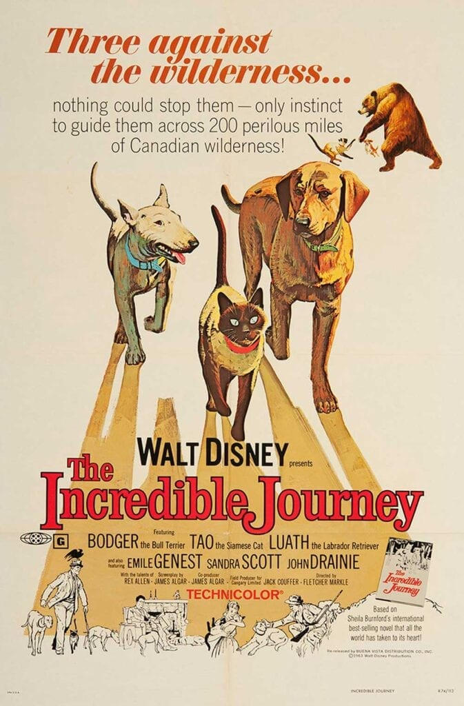 Cat Movies The Incredible Journey