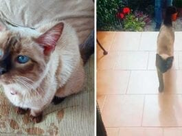 Ching cat escapes home visit neighbor