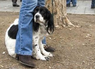 Dog Afraid