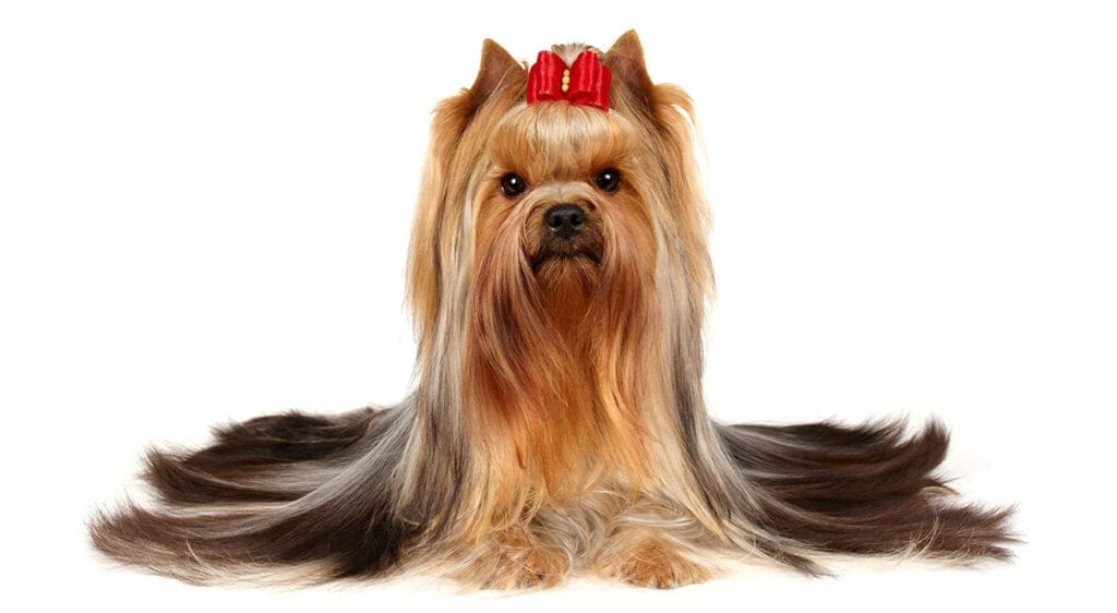Dog Grooming Tips Beginners