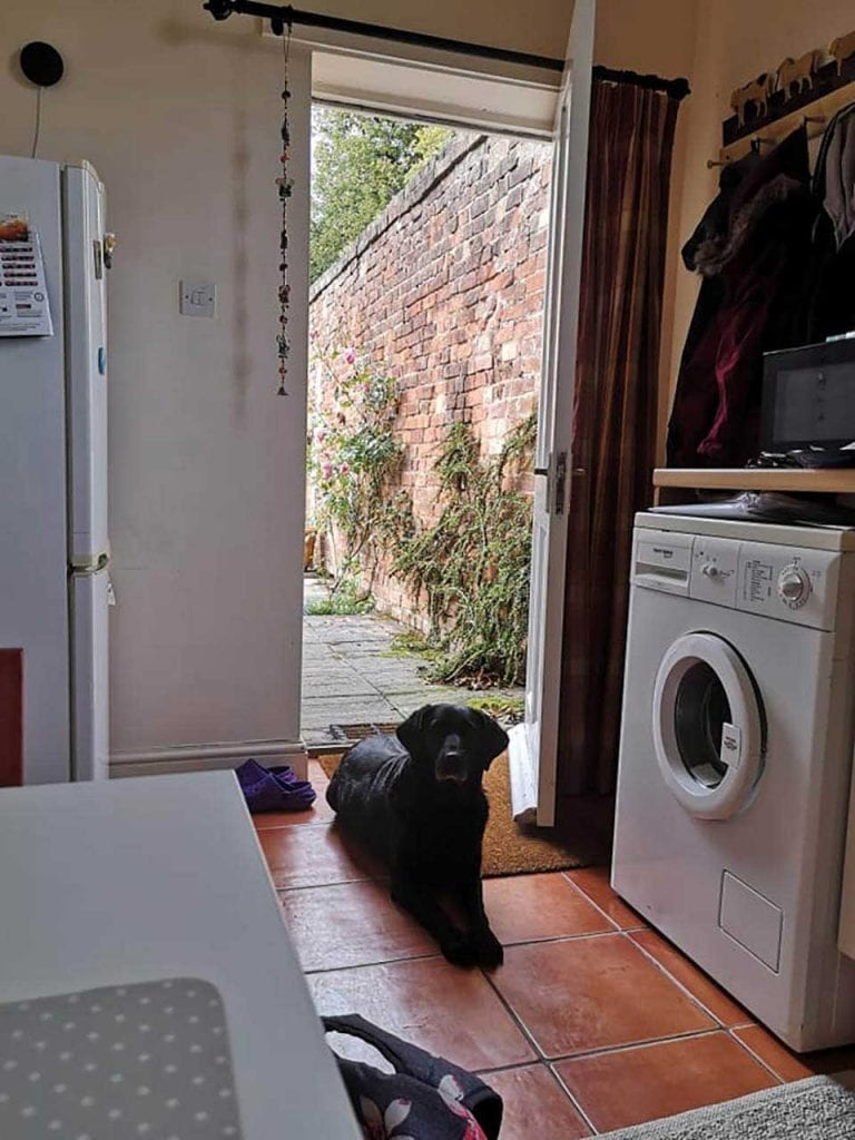 Dog Visits His Neighbor Every Day