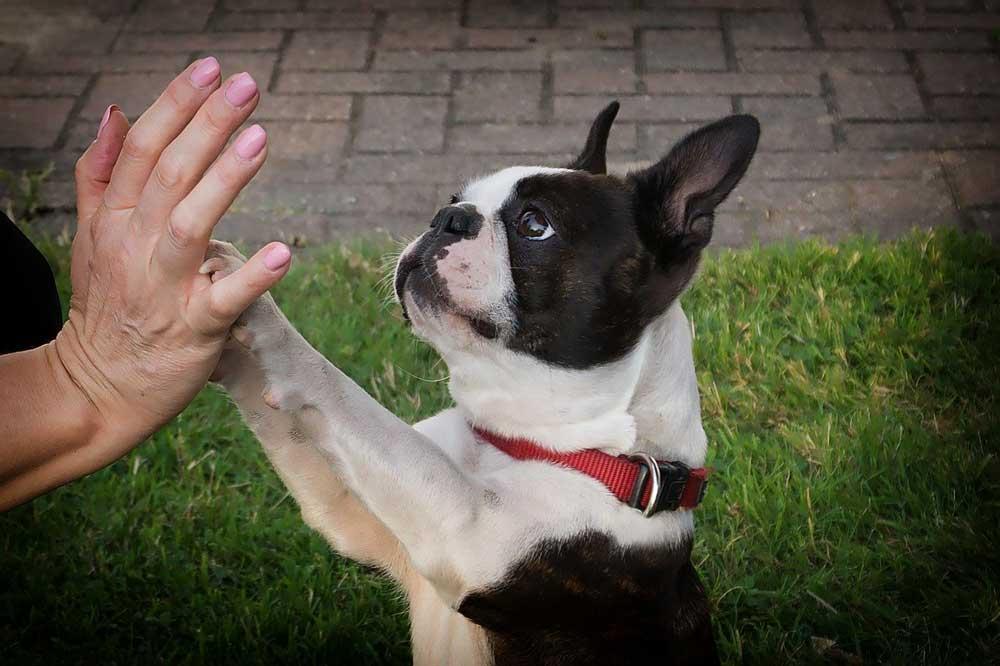 Dog training home