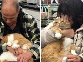 Jacque lap cat hugs finds home