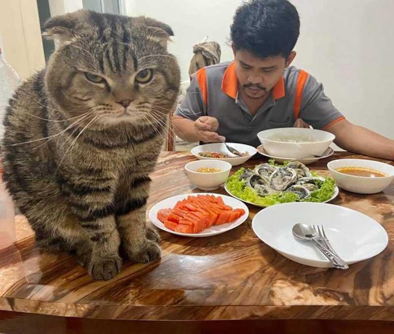 Jarvis cat stole husband nasrin hami