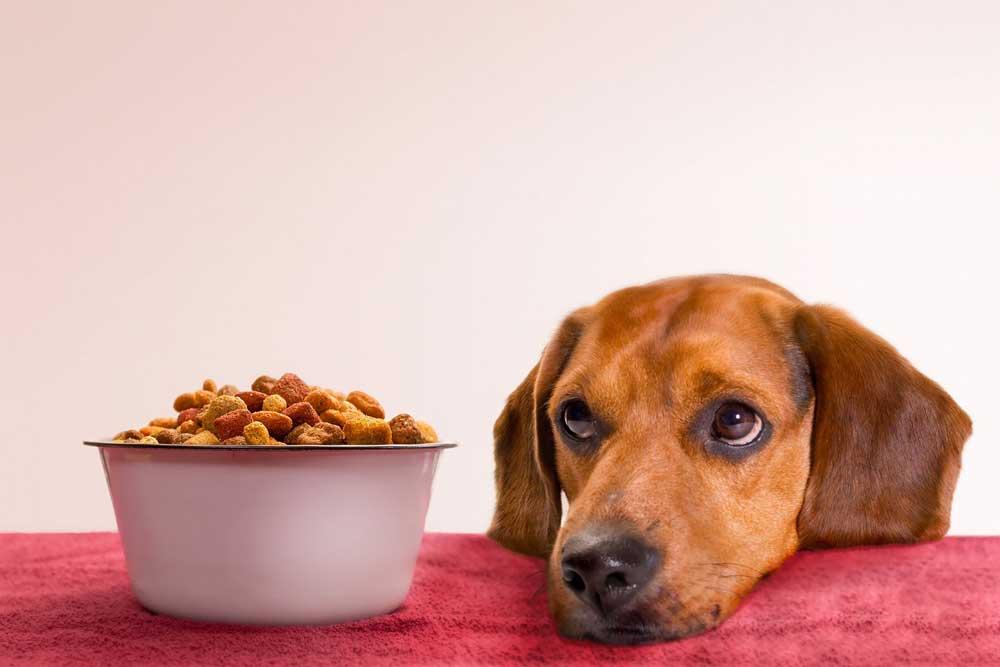 Neutered Dog food