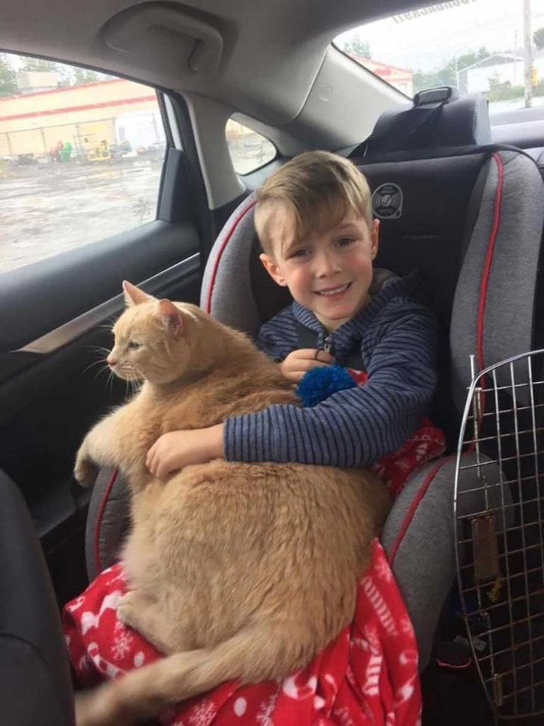 boy picks fat cat Tiny shelter