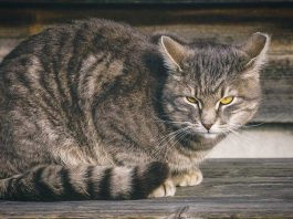 Study cats would kill you bigger