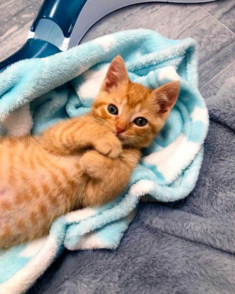 sweet cat family roadside