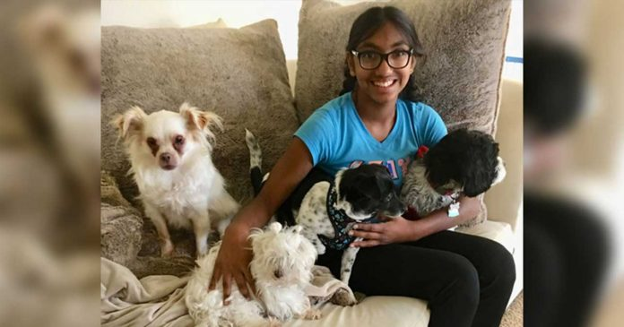 meena teen older dogs adoption