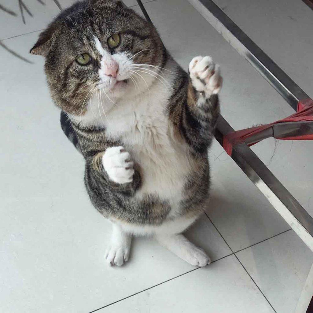 Ah Fei Cat Makes Faces
