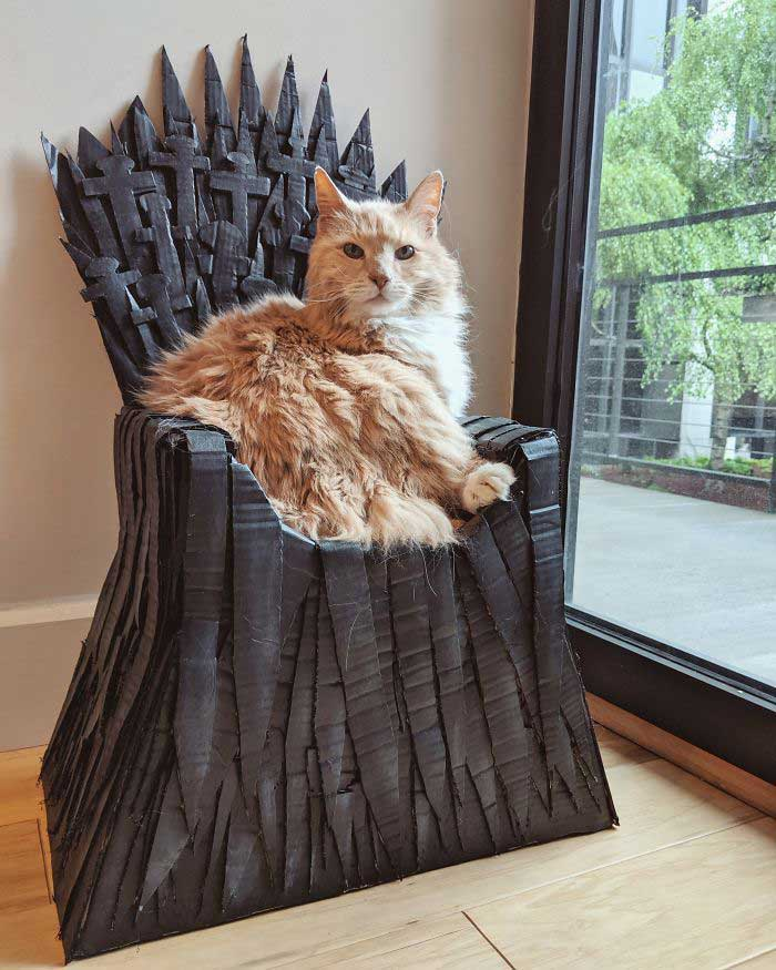 Arthur Maine Coon cat Game Of Thrones