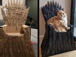 Arthur Maine Coon cat Game Of Thrones