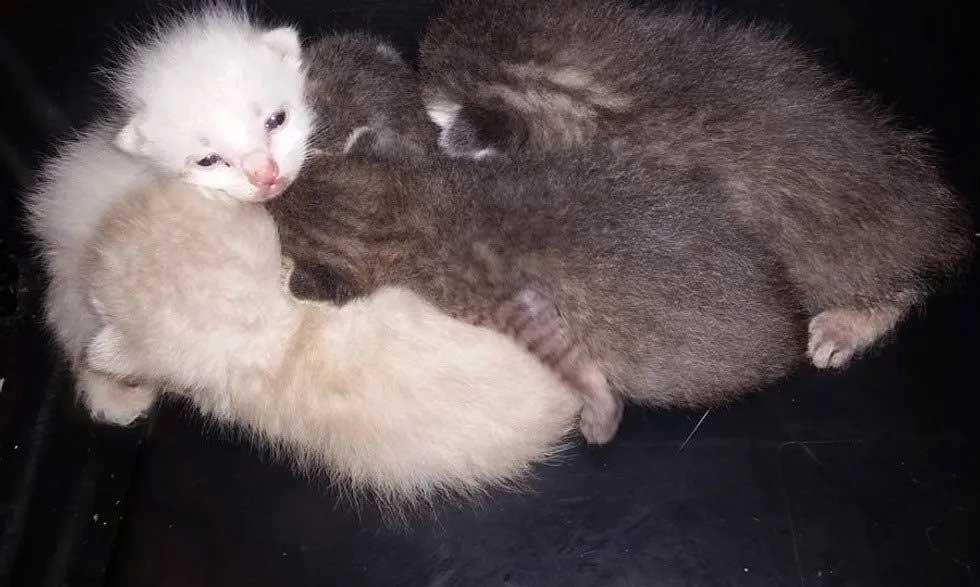 Spent 7 Hours Digging Save Kittens Dumpster